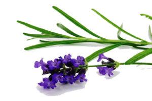Palmarosa-Lavendel