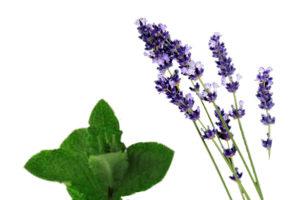Pfefferminz-Lavendel